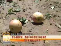 白水县雷牙镇:遭遇60年不遇特大冰雹袭击