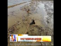 华州区千亩莲藕带动群众通向致富路