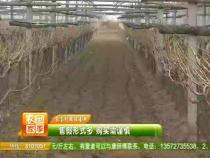 农家四季3月12日