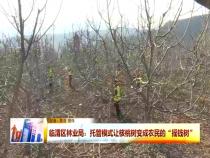 """临渭区林业局:托管模式让核桃树变成农民的""""摇钱树"""""""