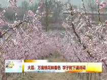 大荔:万亩桃花映春色 学子树下诵诗词