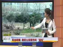 """《百姓大爆料》阳光明媚 朝阳公园里悠闲""""遛鸡"""""""