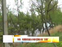 """华阴:风雨导致路边百棵大树""""趴窝"""""""