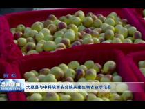 大荔县与中科院西安分院共建生物农业示范县