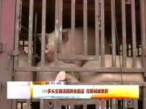 韩城:成功截获查处一起违规跨省偷运生猪案
