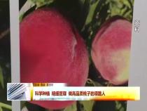 科学种植 精细管理 做高品质桃子的领路人