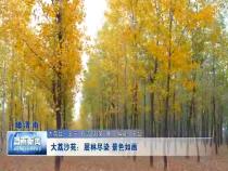 大荔沙苑:層林盡染 景色如畫