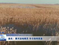 潼關:黃河濕地精靈 冬日獨特美景