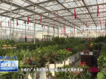 市園林綠化處:更換時令花卉 扮靚冬日渭南
