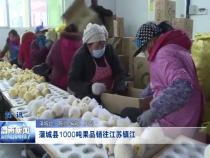 蒲城縣1000噸果品銷往江蘇鎮江