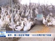 """富平:第一书记当""""鸭贩""""  1600只鸭子有了买家"""