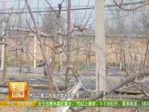 农家四季3月16日