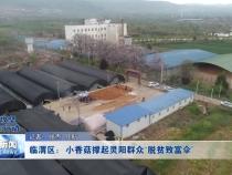 """临渭区:小香菇产业撑起灵阳群众脱贫致富""""伞"""""""