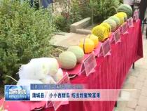 蒲城县:小小西甜瓜  结出甜蜜致富果