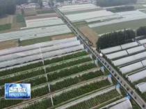 渭南:种养结合 特色产业助力脱贫攻坚