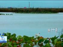 黄河大荔段:景色壮丽山河秀